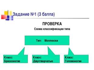 Задание №1 (3 балла) ПРОВЕРКА Схема классификации типа Тип: Моллюски Класс: Б