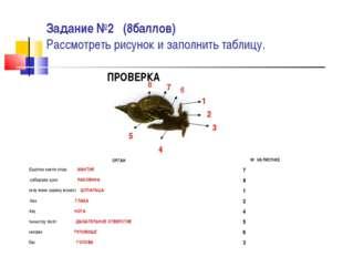 Задание №2 (8баллов) Рассмотреть рисунок и заполнить таблицу. ПРОВЕРКА 1 2 3