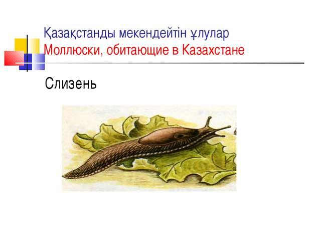 Қазақстанды мекендейтін ұлулар Моллюски, обитающие в Казахстане Слизень
