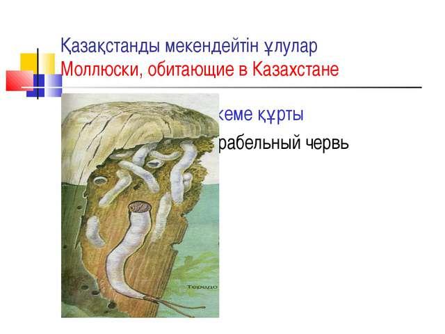 Қазақстанды мекендейтін ұлулар Моллюски, обитающие в Казахстане кеме құрты Ко...