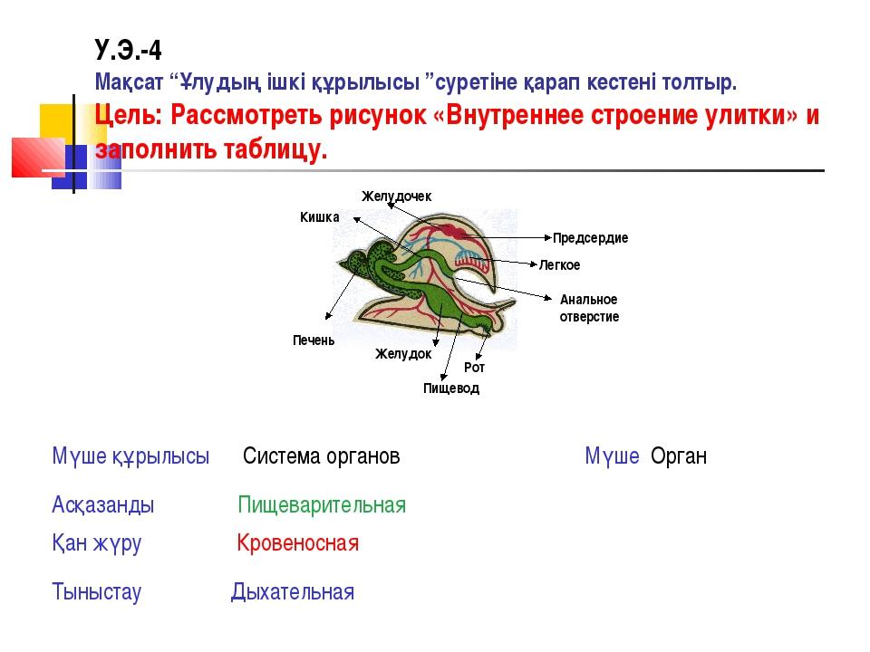 """У.Э.-4 Мақсат """"Ұлудың ішкі құрылысы """"суретіне қарап кестені толтыр. Цель: Рас..."""
