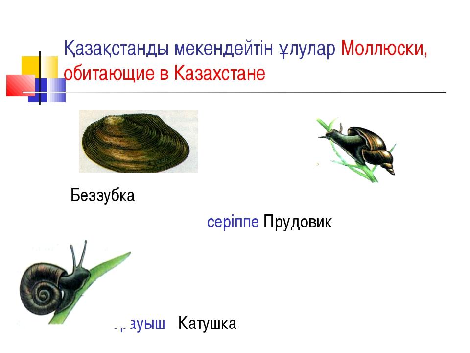 Қазақстанды мекендейтін ұлулар Моллюски, обитающие в Казахстане Беззубка сері...