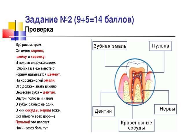 Задание №2 (9+5=14 баллов) Проверка Зуб рассмотрим. Он имеет корень, шейку и...