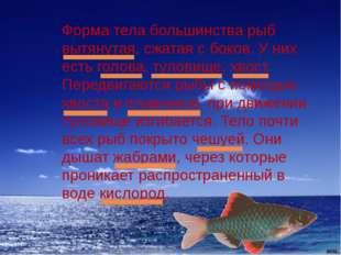 Форма тела большинства рыб вытянутая, сжатая с боков. У них есть голова, туло