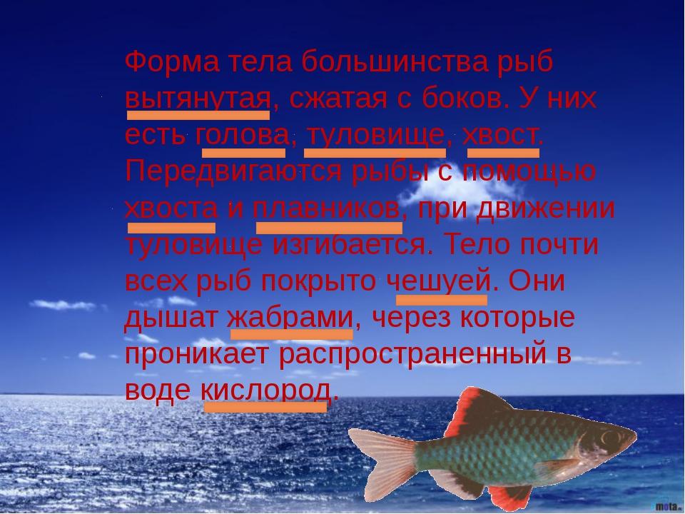 Форма тела большинства рыб вытянутая, сжатая с боков. У них есть голова, туло...