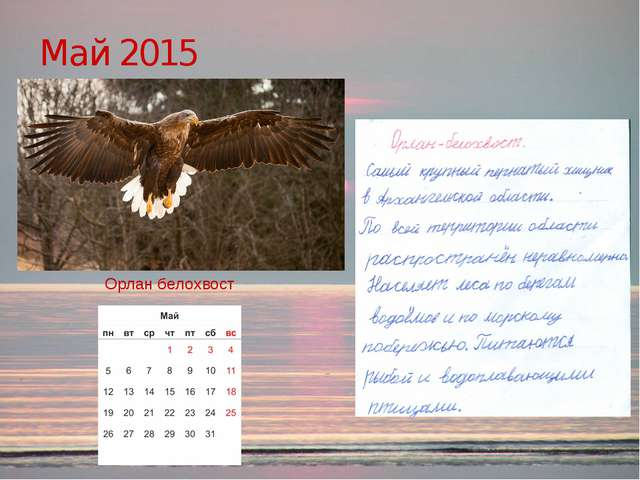 Май 2015 Орлан белохвост