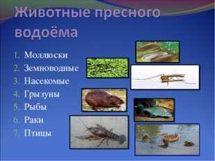 Моллюски Земноводные Насекомые Грызуны Рыбы Раки Птицы