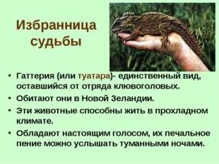 Избранница судьбы Гаттерия (или туатара)- единственный вид, оставшийся от отр