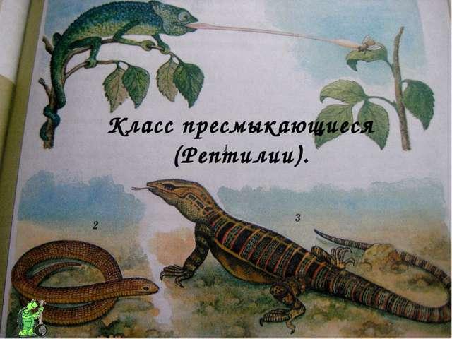 Класс пресмыкающиеся (Рептилии).