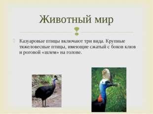 Казуаровые птицы включают три вида. Крупные тяжеловесные птицы, имеющие сжаты