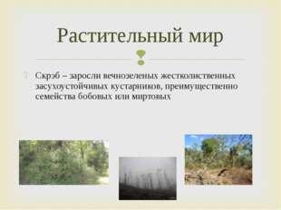Скрэб – заросли вечнозеленых жестколиственных засухоустойчивых кустарников, п