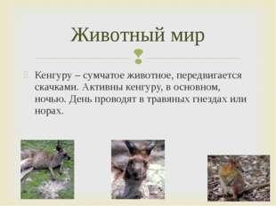 Кенгуру – сумчатое животное, передвигается скачками. Активны кенгуру, в основ