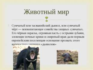 Сумчатый или тасманийский дьявол, или сумчатый чёрт — млекопитающее семейства