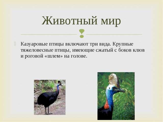 Казуаровые птицы включают три вида. Крупные тяжеловесные птицы, имеющие сжаты...