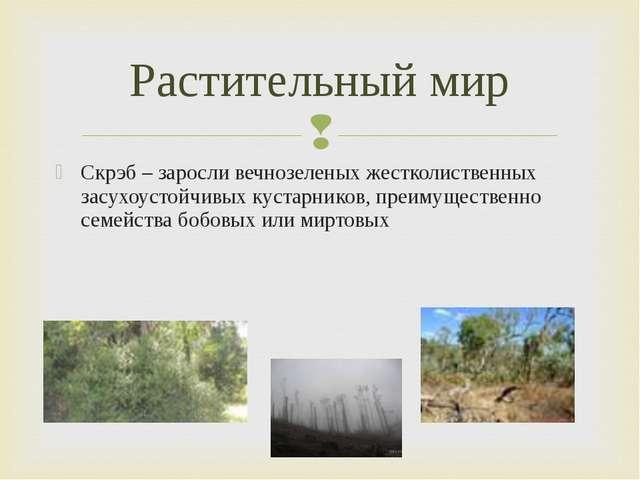 Скрэб – заросли вечнозеленых жестколиственных засухоустойчивых кустарников, п...