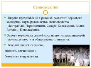 Свиноводство Широко представлено в районах развитого зернового хозяйства, кар