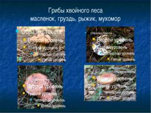 Грибы хвойного леса масленок, груздь, рыжик, мухомор