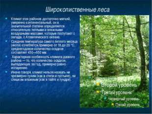 Широколиственные леса Климат этих районов достаточно мягкий, умеренно контине