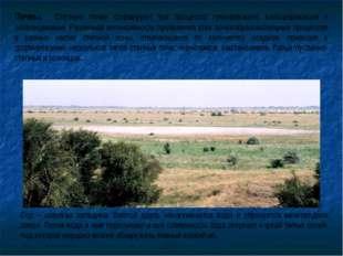 Почвы. Степную почву формируют три процесса: гумификация, кальцификация и осо