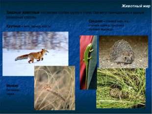 Животный мир Хищные животные составляют особую группу в степи. Они могут прин