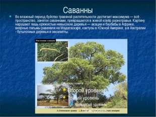 Саванны Во влажный период буйство травяной растительности достигает максимума