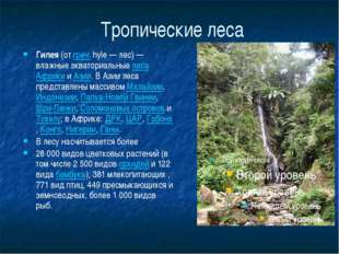 Тропические леса Гилея (от греч. hyle— лес)— влажные экваториальные леса Аф