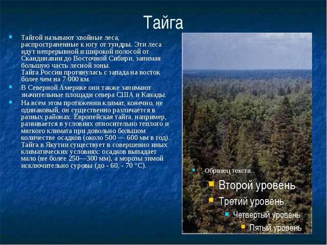 Тайга Тайгой называют хвойные леса, распространенные к югу от тундры. Эти лес...