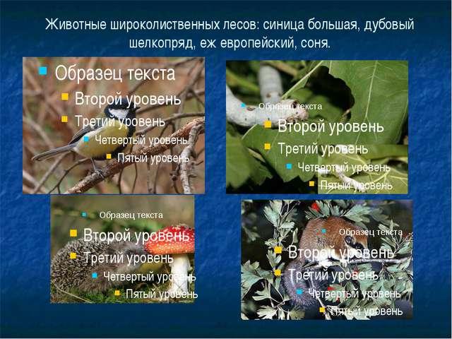 Животные широколиственных лесов: синица большая, дубовый шелкопряд, еж европе...