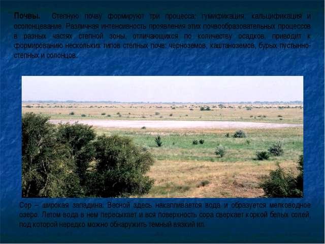 Почвы. Степную почву формируют три процесса: гумификация, кальцификация и осо...