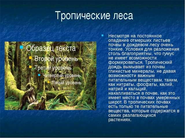 Тропические леса Несмотря на постоянное опадание отмерших листьев почвы в дож...