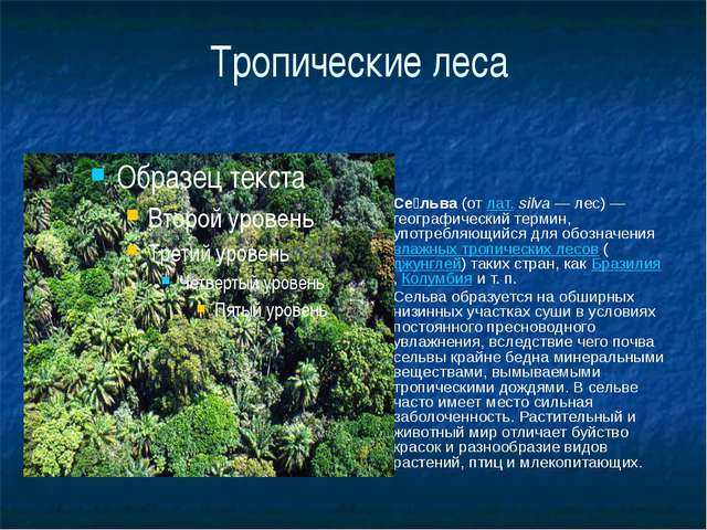 Тропические леса Се́льва (от лат.silva— лес)— географический термин, употр...