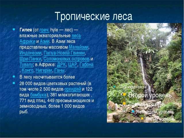 Тропические леса Гилея (от греч. hyle— лес)— влажные экваториальные леса Аф...