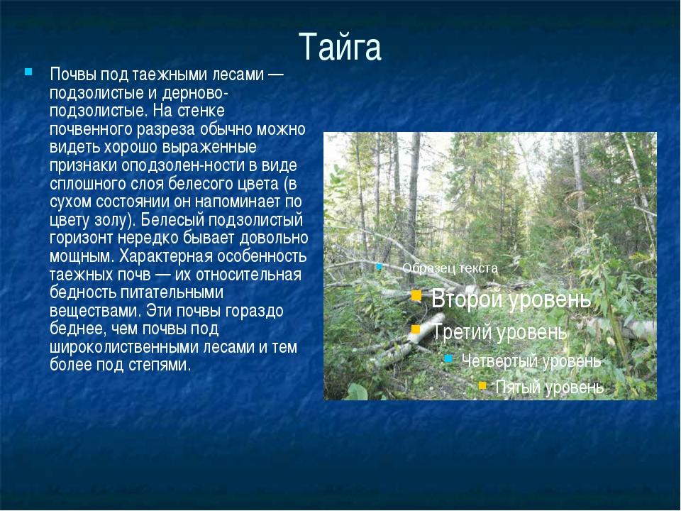 Тайга Почвы под таежными лесами — подзолистые и дерново-подзолистые. На стенк...