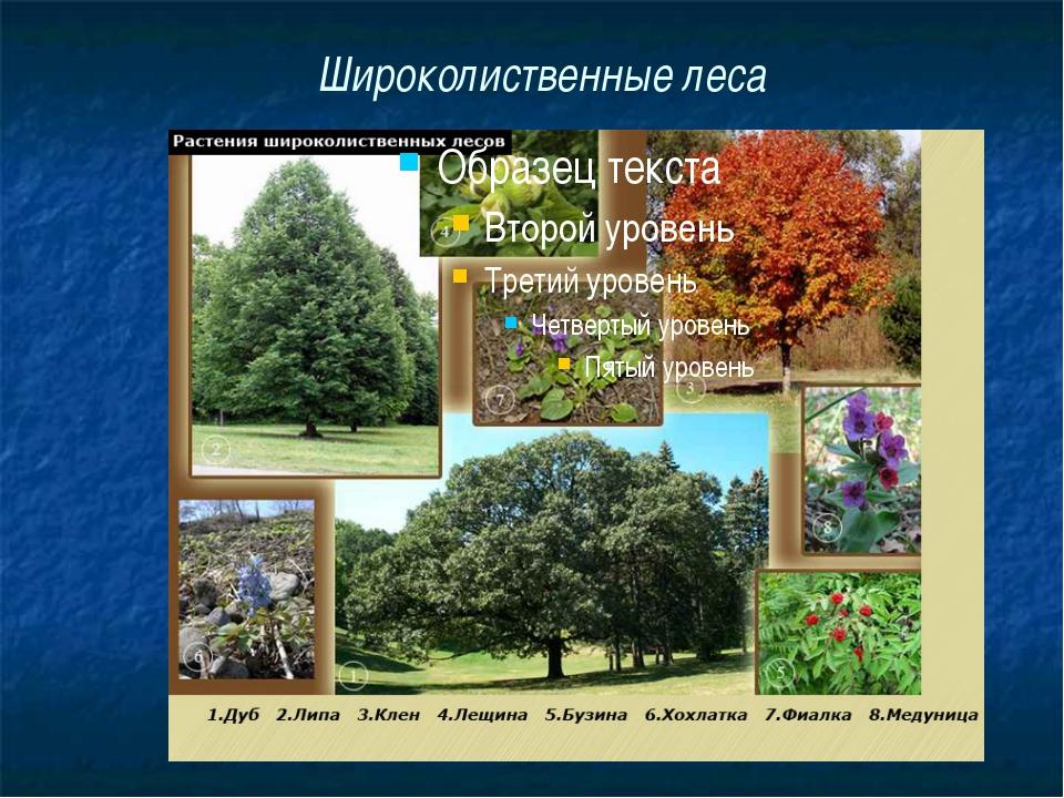 растения в смешанных лесах евразии