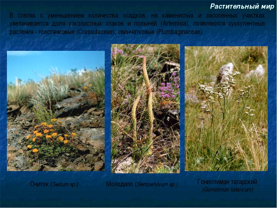Растительный мир В степях с уменьшением количества осадков, на каменистых и з...