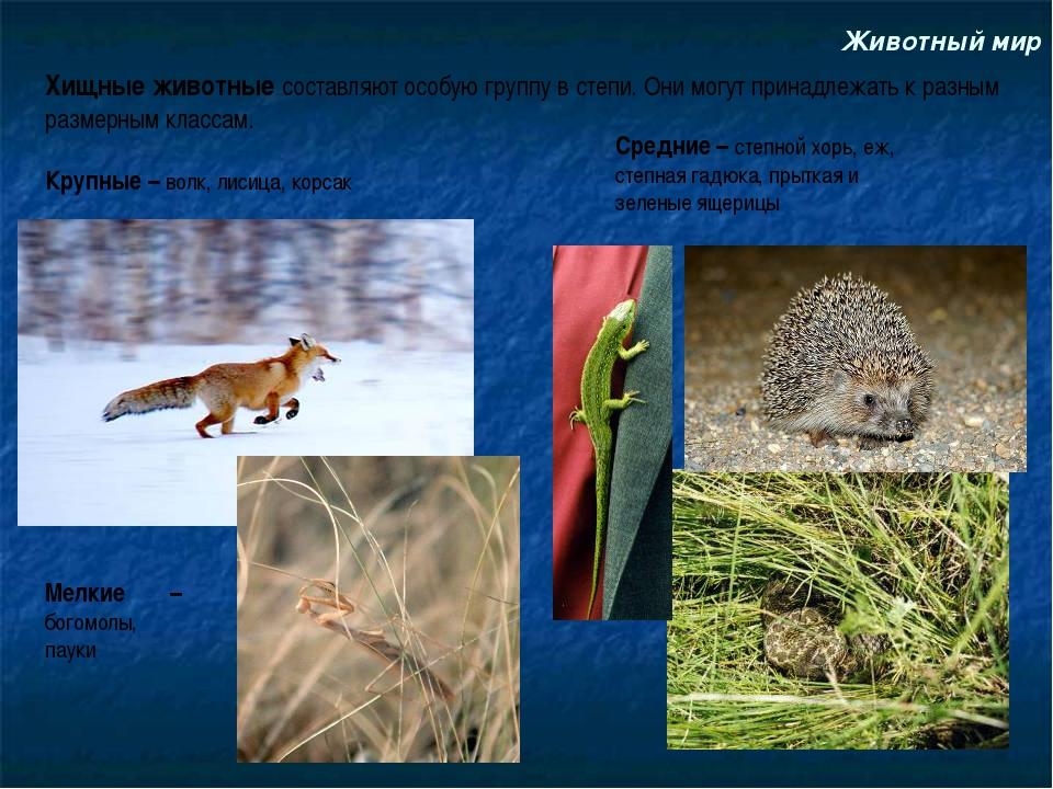 Животный мир Хищные животные составляют особую группу в степи. Они могут прин...