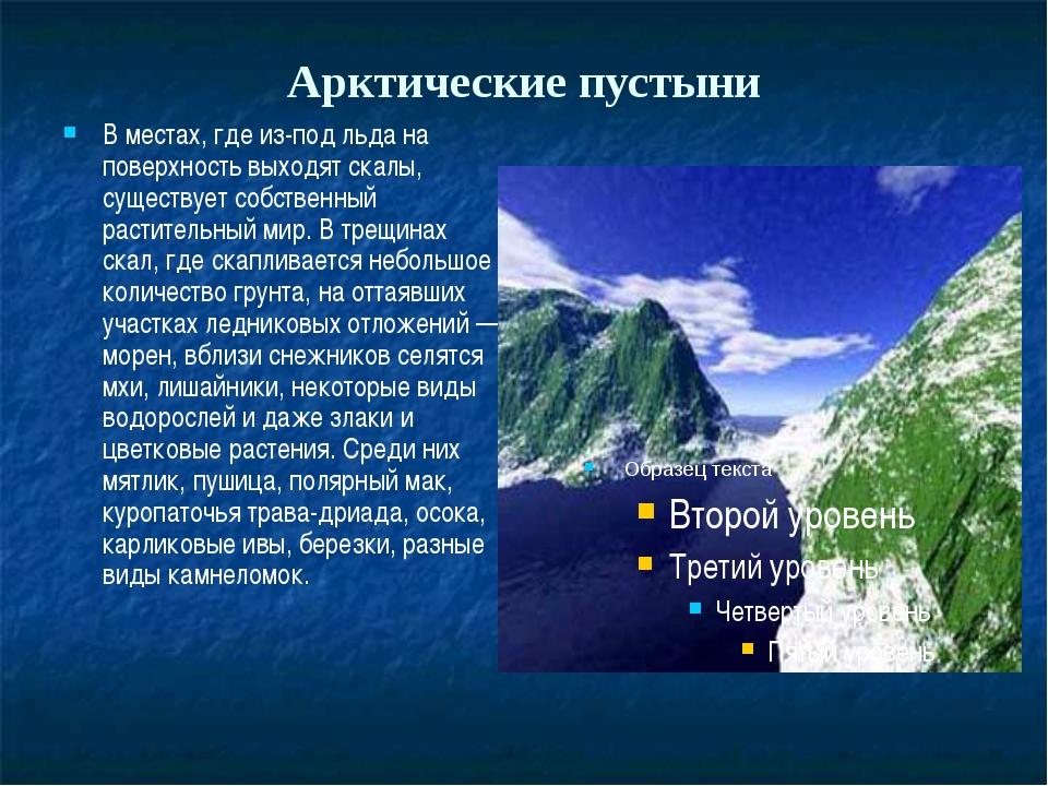Арктические пустыни В местах, где из-под льда на поверхность выходят скалы, с...