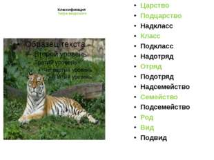 Классификация Тигра амурского Царство Подцарство Надкласс Класс Подкласс Надо