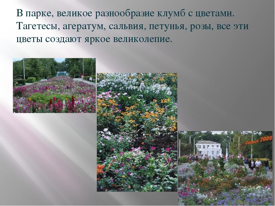 В парке, великое разнообразие клумб с цветами. Тагетесы, агератум, сальвия,...