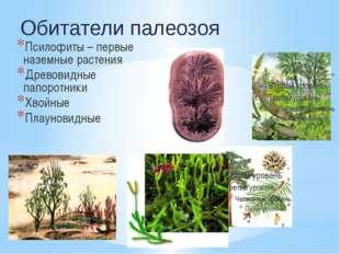 Псилофиты – первые наземные растения Древовидные папоротники Хвойные Плаунови