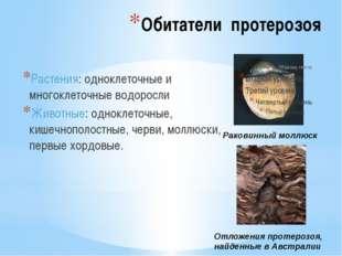 Обитатели протерозоя Растения: одноклеточные и многоклеточные водоросли Живот