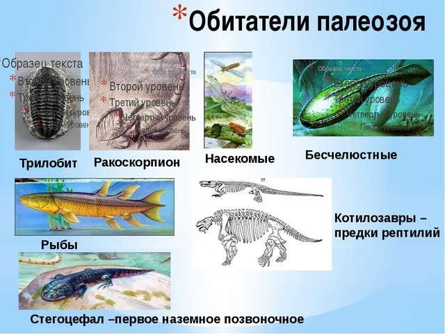 Обитатели палеозоя Трилобит Ракоскорпион Бесчелюстные Рыбы Стегоцефал –первое...