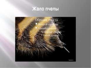 Жало пчелы