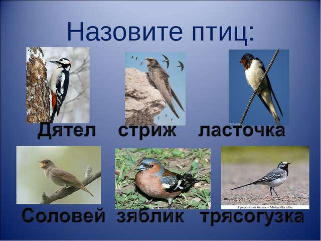 Назовите птиц: