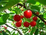 http://www.latoro.ru/oboi/food/16503-small-oboi-shpanka.jpg