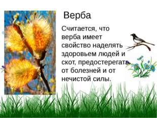 Верба Считается, что верба имеет свойство наделять здоровьем людей и скот, пр