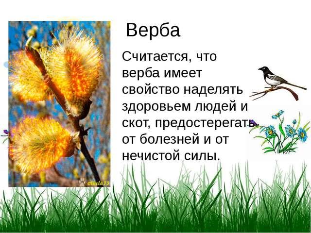 Верба Считается, что верба имеет свойство наделять здоровьем людей и скот, пр...