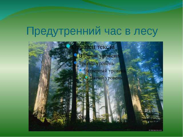 Предутренний час в лесу