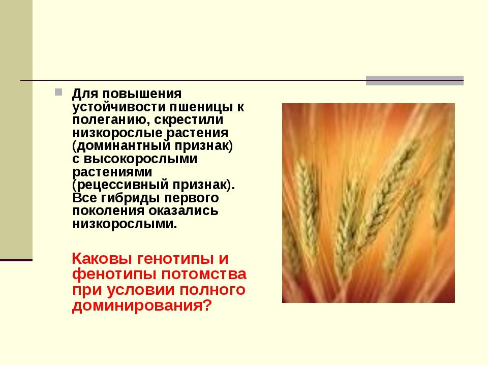 Для повышения устойчивости пшеницы к полеганию, скрестили низкорослые растени...