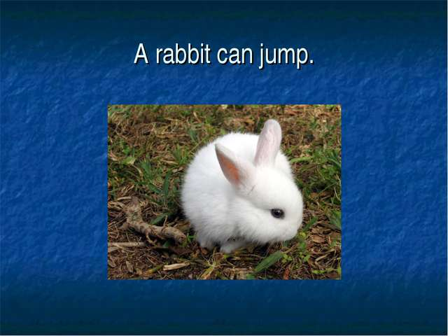 A rabbit can jump.